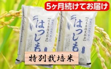 [№5644-0467]特別栽培米★[頒布会] 5カ月★毎月 精米20kg または玄米22kg 【ハツシモ】