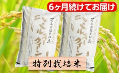 [№5644-0468]特別栽培米★[頒布会] 6カ月★毎月 精米20kg または玄米22kg 【ミルキークイーン】