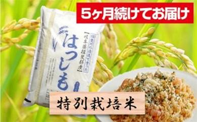 [№5644-0459]特別栽培米★[頒布会] 5カ月★毎月 精米10kg または玄米11kg 【ハツシモ】