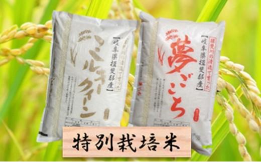 [№5644-0442]特別栽培米★精米20kg(分搗き可)または玄米22kg 【ミルキークイーン・夢ごこち】