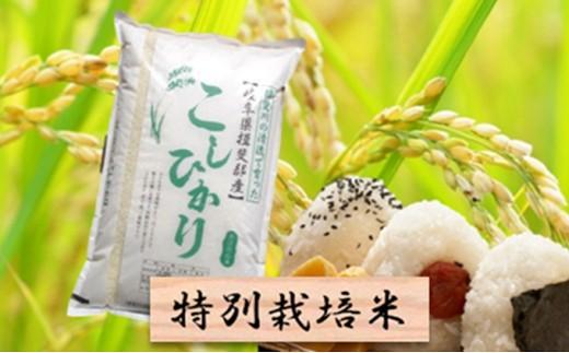 [№5644-0433]特別栽培米★精米10kg(分搗き可)または玄米11kg 【コシヒカリ】