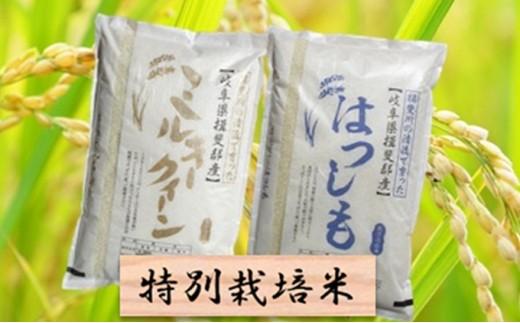 [№5644-0443]特別栽培米★精米20kg(分搗き可)または玄米22kg 【ハツシモ・コシヒカリ】