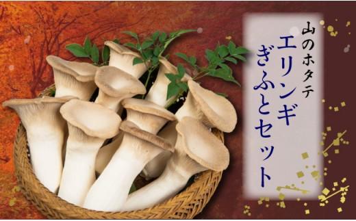 【無農薬栽培】「山のホタテ」 エリンギ ギフトセット