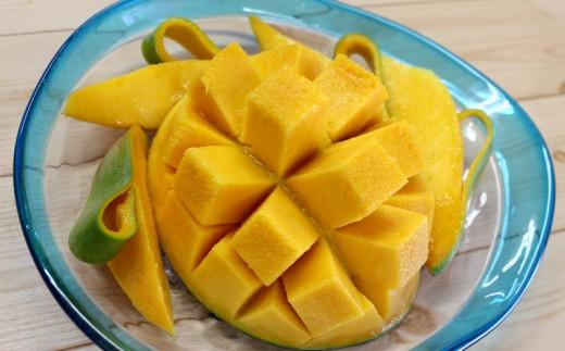 【緊急追加!!】山城マンゴー屋のキーツマンゴー約2kg