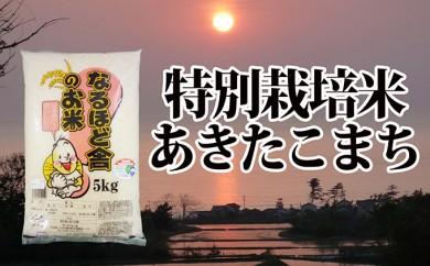 [№5685-1027]新米!減農薬のあきたこまち10kg(5kg×2)