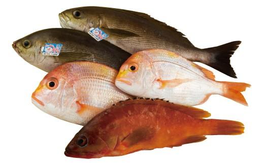 宇久島近海の新鮮魚類をお届けします