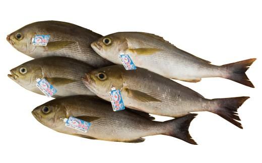 宇久小値賀漁協のブランド魚(値賀咲)をお届けします