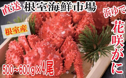 CB-57002 【北海道根室産】浜ゆで花咲ガニ500~600g×4尾