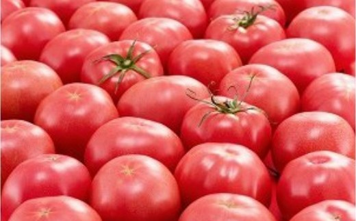 Fst-02四万十とまとの採れたてトマト 5.4kg
