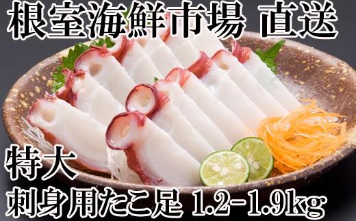 CA-60045 【北海道根室産】根室海鮮市場<直送>お刺身用たこ足1.2~1.9kg×1本