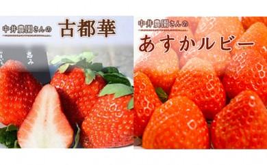 [№5661-0101]「古都華」・「あすかルビ-」の贅沢味わい2種セット