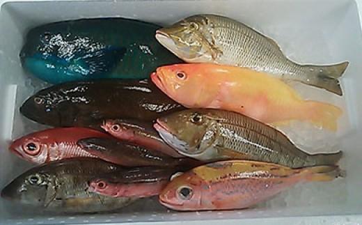 おまかせ鮮魚セット(約7㎏)