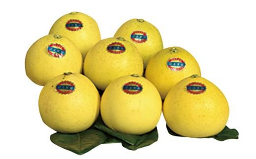 佐世保の特産柑橘果実、江上文旦の詰め合わせ