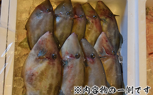 新潟県寺泊産【鮮魚5~6kg】詰合せ