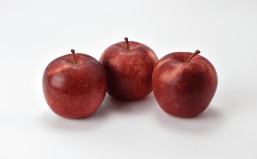 りんごは時期の旬のものをお届けしますのでお楽しみに!