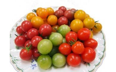 「栗林農園」カラフルミニトマト詰合せ