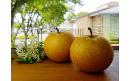 関永果樹園の梨(彩玉)5kg