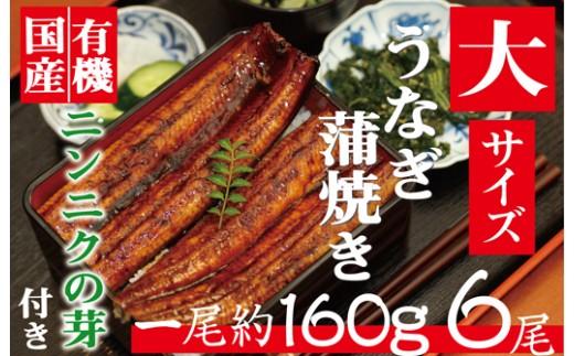 肉厚ふわっ『大サイズ!!うなぎ蒲焼き』6尾。有機ニンニクの芽付き