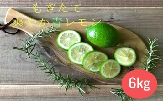 B-273 希少な宮崎県産 青レモン 6kg  1箱【5,000pt】
