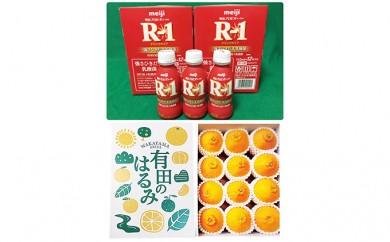 [№5745-1338]【健康セット】明治 R-1 112ml 24本 と 有田のはるみ 化粧箱 12個入り M~2Lサイズ(サイズおまかせ)