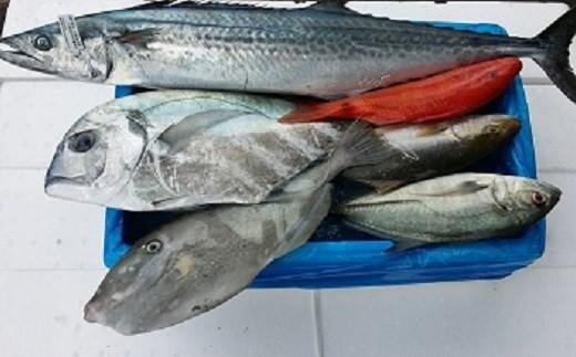 [0341]漁師におまかせの鮮魚セット A
