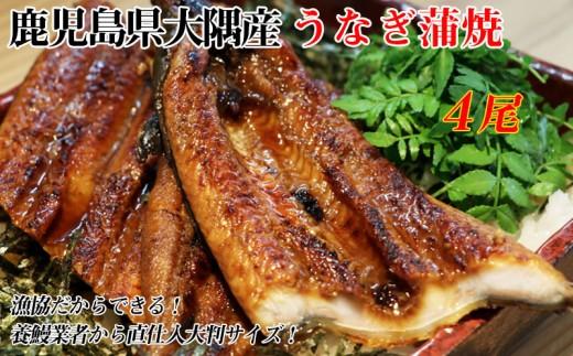 B2-0201/【大隅うなぎ】漁協だからできる!養鰻業者から直仕入大判蒲焼4尾