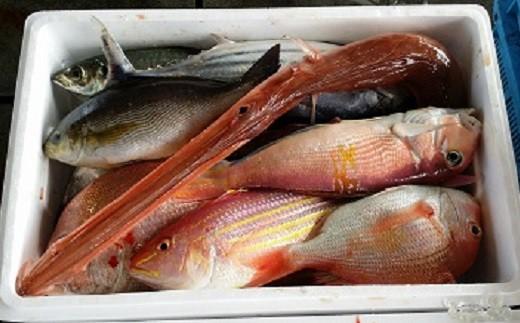 [0340]土佐湾鮮魚のお造りセット B