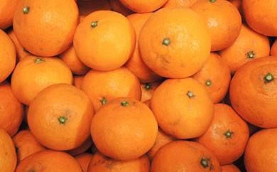 柑橘類のアンカー南津海、レモン3個入り 合計5㎏