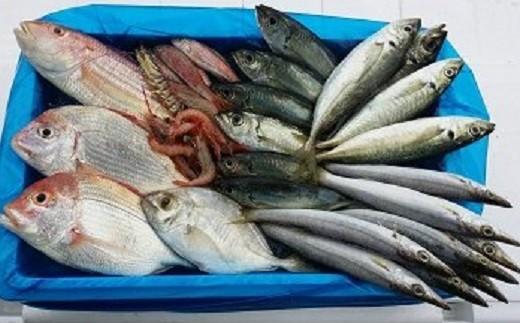 [0342]漁師におまかせの鮮魚セット B