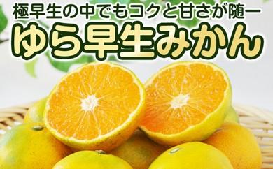 [№5910-0200]ゆら早生みかん(極早生)5kg 希少品種 和歌山県産