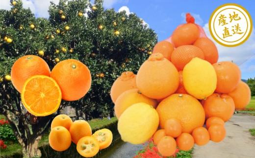 【鹿児島県南さつま市産】旬の柑橘類詰め合わせ