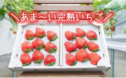 HMG183 大粒あま~い完熟いちご<八幡平市「彩花園」よりお届け!!>