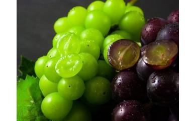 贅沢!もぎたて葡萄のセット(1.5kg)