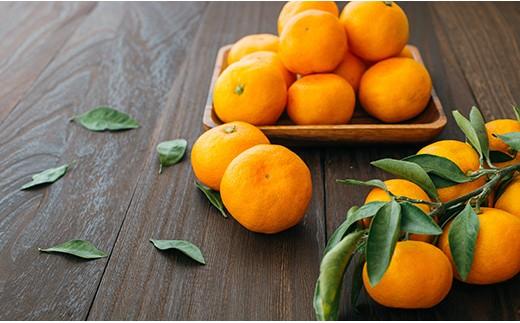 R-22 かねひろの柑橘定期便  5回コース
