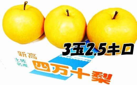 Ckn-03 四万十育ちの新高梨【お手軽3玉セット!】