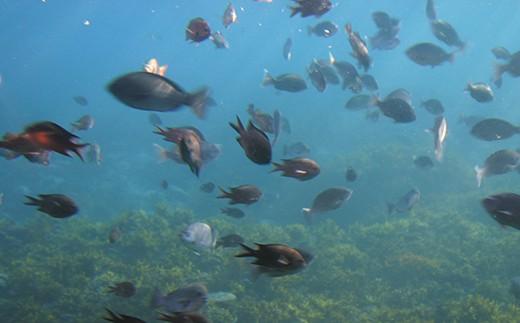 見ることができる魚は季節や天候などによって色々。どんな魚に会えるかはお楽しみに!