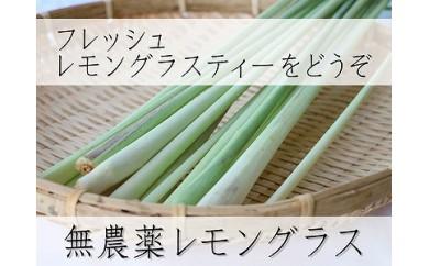 【宮古島産】無農薬栽培 レモングラス(生・フレッシュ)500g