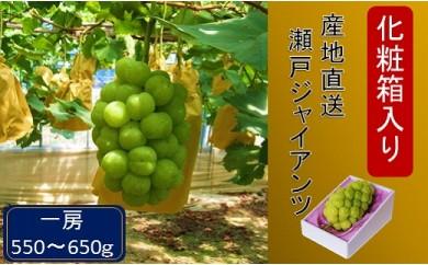AA06 化粧箱入り 産地直送瀬戸ジャイアンツ(1房550g~650g)