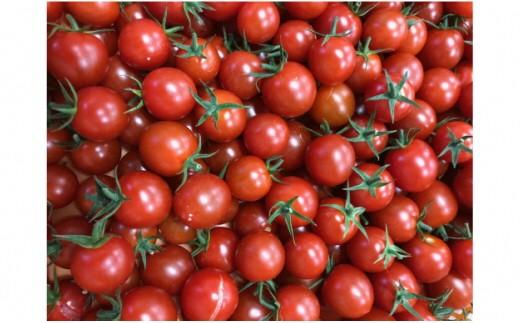 30-1-54.高糖度オスミックトマト味比べ4種