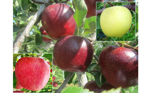 [№5676-0167]園主お勧め 信州りんご詰合せ 5kg