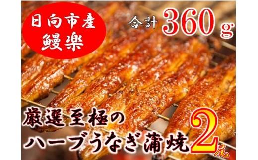 B12-14 宮崎県日向市産・鰻楽ハーブうなぎ蒲焼2尾