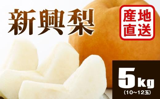B752 【産地直送】新興梨 約5kg(10~12玉)