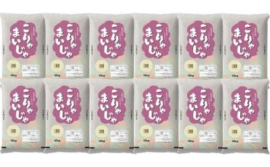 【定期便】10kgが毎月1年間届く!こりゃまいじゃ精米(奥能登柳田地区限定コシヒカリ