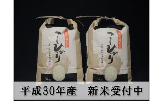 095 大沼ファームの庄内三川産コシヒカリ10kg