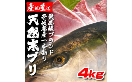 B061-01壱岐島産天然寒ブリ(4キロ台・丸もの)  10,200pt