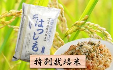 [№5644-0435]特別栽培米★精米10kg(分搗き可)または玄米11kg 【ハツシモ】