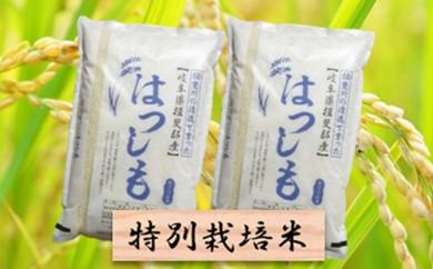[№5644-0439]特別栽培米★精米20kg(分搗き可)または玄米22kg 【ハツシモ】