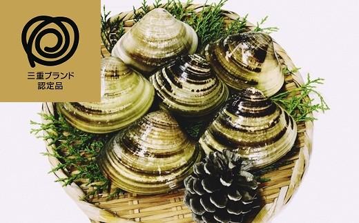 m_08 マルヨシ水産 桑名産大粒天然蛤1.3kg