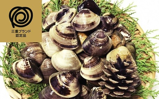 b_31 マルヨシ水産 桑名産中粒天然蛤2kg