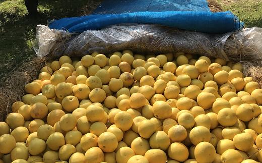 小野果樹園の文旦【贈答用】5kg(サイズ混合)